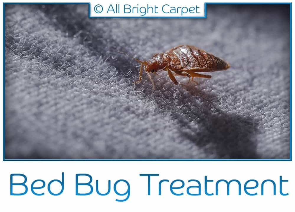 Bed Bug Treatment - Remsen Village 11236