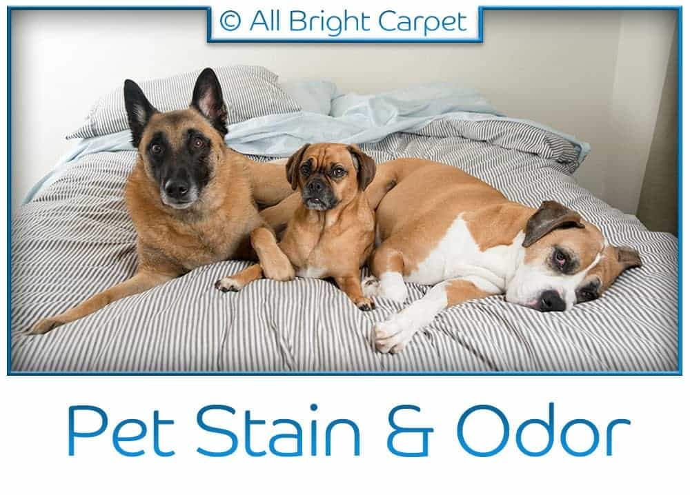 Pet Stain and Odor Removal - Brooklyn