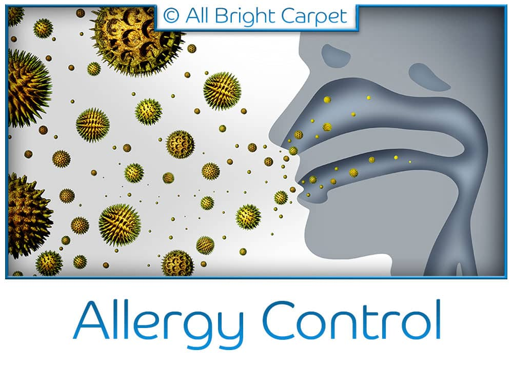 Allergy Control - Remsen Village 11236